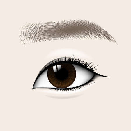 Beautiful Asian Woman Eye and Brow. Vector illustration Çizim