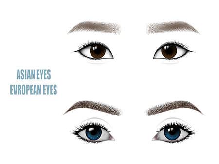 Set of Beautiful Asian and European Woman Eyes and Brows. Vector illustration.