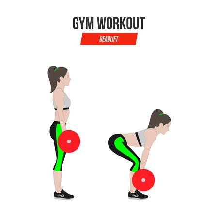 Deadlift. Deadlift with a barbell. Sport exercises. Exercises in a gym. Illustration of an active lifestyle. Vector.