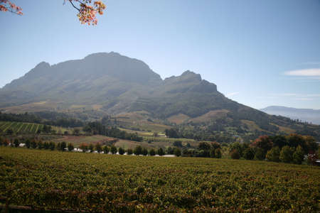 breath taking: Cape Wine Lands, South Africa