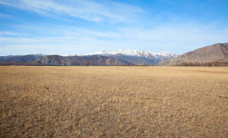 Alpine steppe in the background of snowy mountains photo