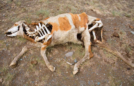 Dead animals in the arid steppe photo