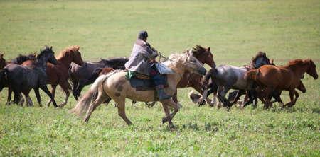 Man shepherd on horseback tending a herd of horses Stock Photo - 12185111