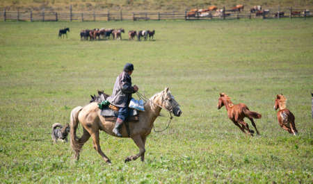 Man shepherd on horseback tending a herd of horses Stock Photo - 12185112