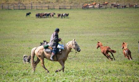 Man shepherd on horseback tending a herd of horses Stock Photo - 12185112