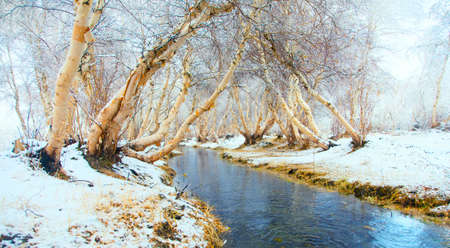 frozen creek: Winter landscape. The river is not covered by ice in the woods