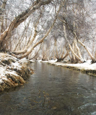 Winter landscape. The river is not covered by ice in the woods photo