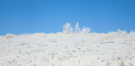 Winter landscape. A blue sky and trees in the frost photo