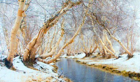 Winter landscape. The river is not covered by ice in the woods