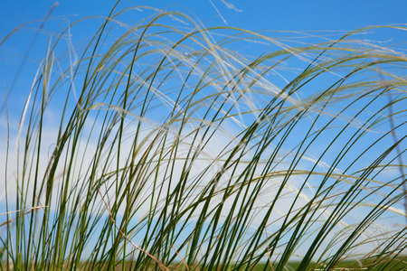 Stipa Against the backdrop of a blue summer sky photo