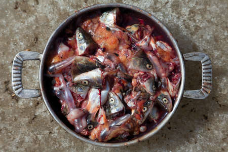 fish heads in close-up, the waste in the kitchen Stock Photo - 14702580