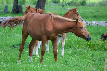 Foals in a meadow with green grass on a summer day Stock Photo - 15822252