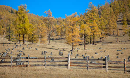The fence enclosing livestock grazing on the hillside photo