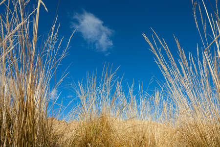 Blue sky above. clear day Stock Photo
