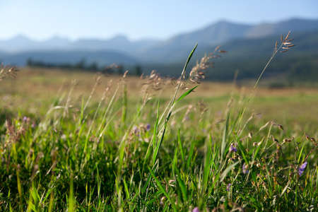 daisy meadow and mountains in the background Stock Photo - 15917334