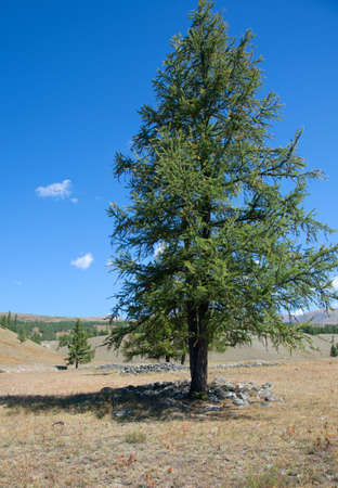 Scythian tomb and sprouted above the tree photo