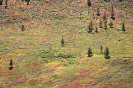 alpine tundra: Alpine tundra in the mountains. Elfin wood and spruce