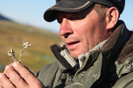 Romantic man breathes scent of a flower edelweiss photo