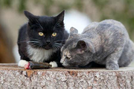Two kittens eat fresh fish. Stock Photo - 16872202