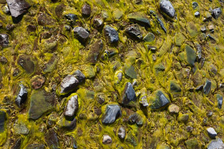 Background of green algae and stones Stock Photo - 17878119