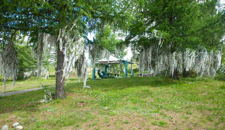 shamanic: Ribbons on trees. Shamanic cult of mountains - oboo