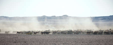 a flock of sheep on the steppes of Mongolia photo