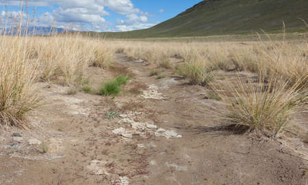 scorched: Salt steppe, lifeless scorched earth Stock Photo
