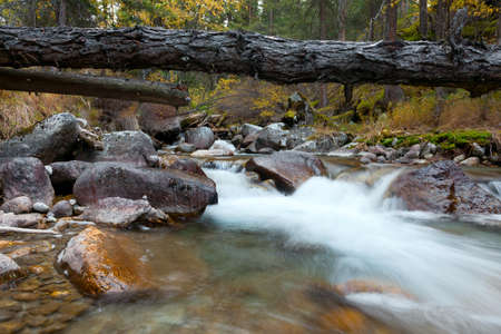 Mountain stream in early morning. In the forest the rain photo