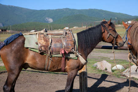 hitching post: Drawn by horses before the expedition Stock Photo