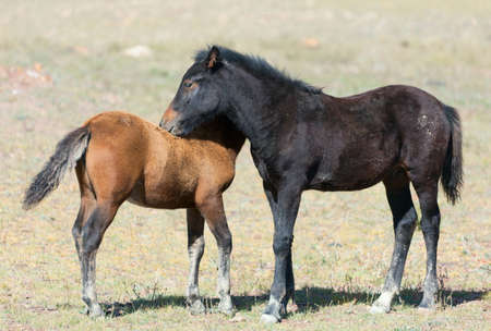 contemporaneous: A herd of horses with foals