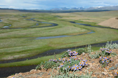 independent mongolia: Prairie river in the mountain valleys of the Mongolian Altai