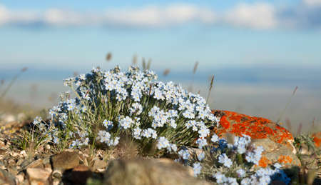 forget: flowers forget me note on a mountain summer meadow Stock Photo