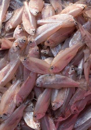fish head: Fresh fish sold on street market