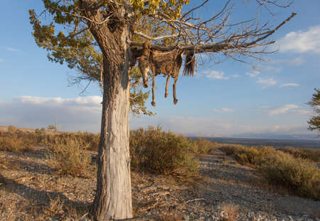 calaveras: Hide sacrificial horse hanging on the tree