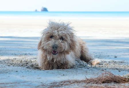 dig: Dogs dig holes in the sand on the beach