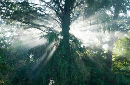 tropics: Mystical rain forest in the tropics