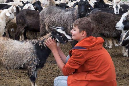 a boy and a goat on a farm Standard-Bild