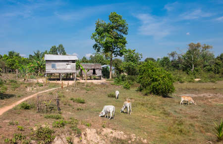 southeastern: Typical village in southeastern Asia in Cambodia