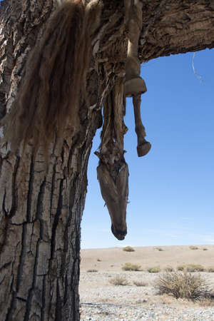 Hide sacrificial horse hanging on the tree