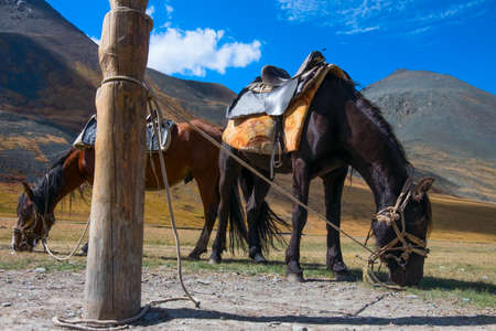 Hitching post and horses in the Altai Mountains Stock Photo