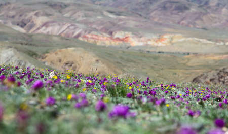 Flowers in a mountain valley on the slopes Standard-Bild