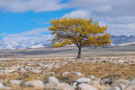 Lonely tree in the steppe in the mountains