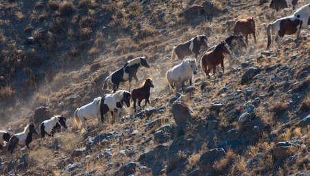A herd of horses on a hillside in the mountains