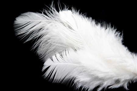 animalitos tiernos: pluma blanca sobre fondo negro