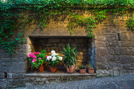 Wall decorated with flowers on the street in the evening time photo