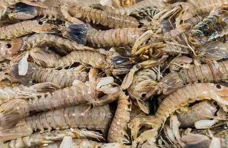 molluscs: Prawns, fresh, chilled on a shelf of the market Stock Photo