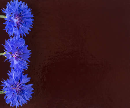 claret: cornflowers against a dark claret background
