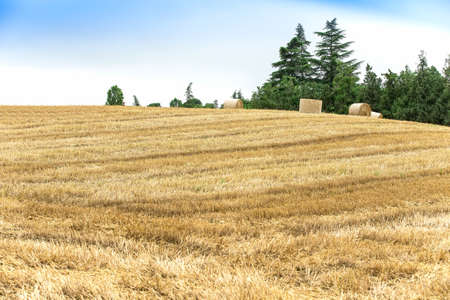 penned: Landscape, field and penned hay
