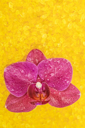 salts: Orchid flower on the background of the spa salts Stock Photo