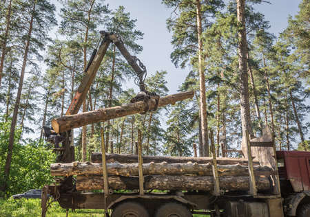 pointing device: Pointing device downloads the timber carrier